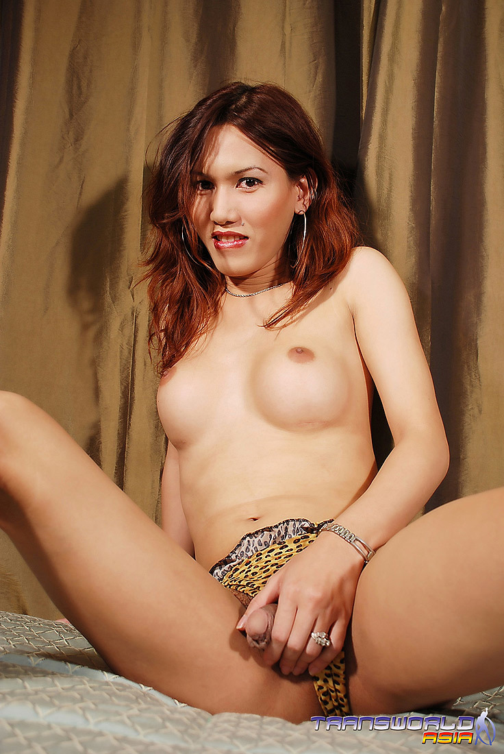A Gorgeous Thai Tgirl With Huge Breasts And A Bountiful Dick Cumming Raw